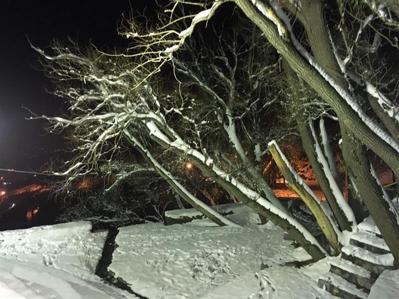 هنر عکاسی زمستان رها