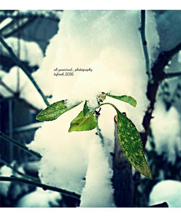هنر عکاسی زمستان yaserirad_photo