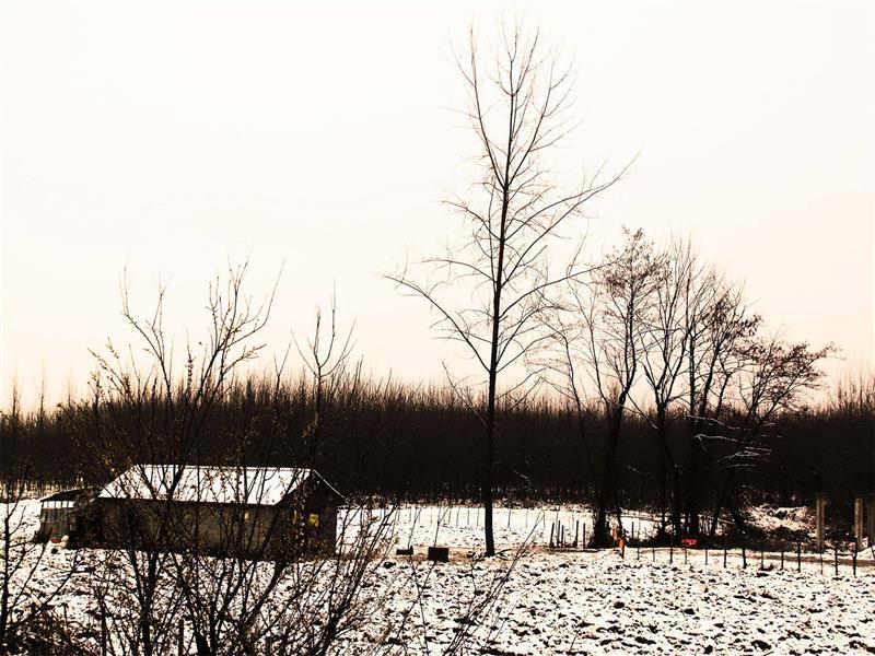 هنر عکاسی زمستان zahraasli