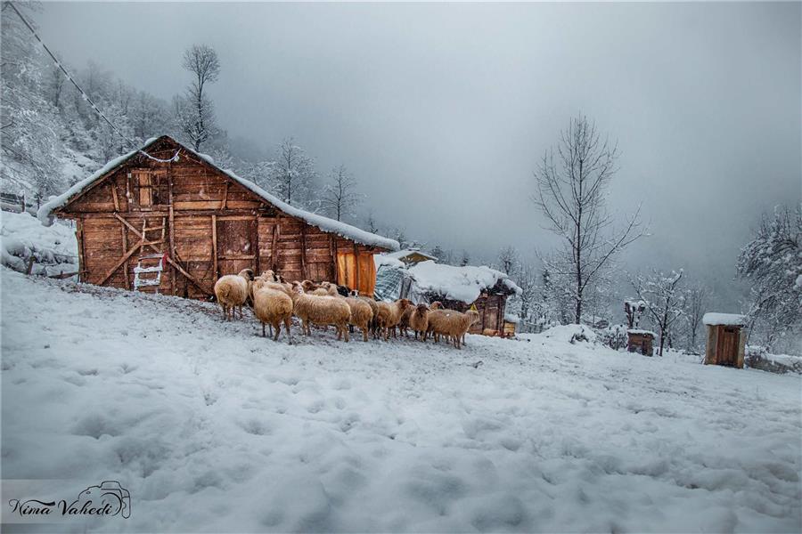 هنر عکاسی زمستان ZooM