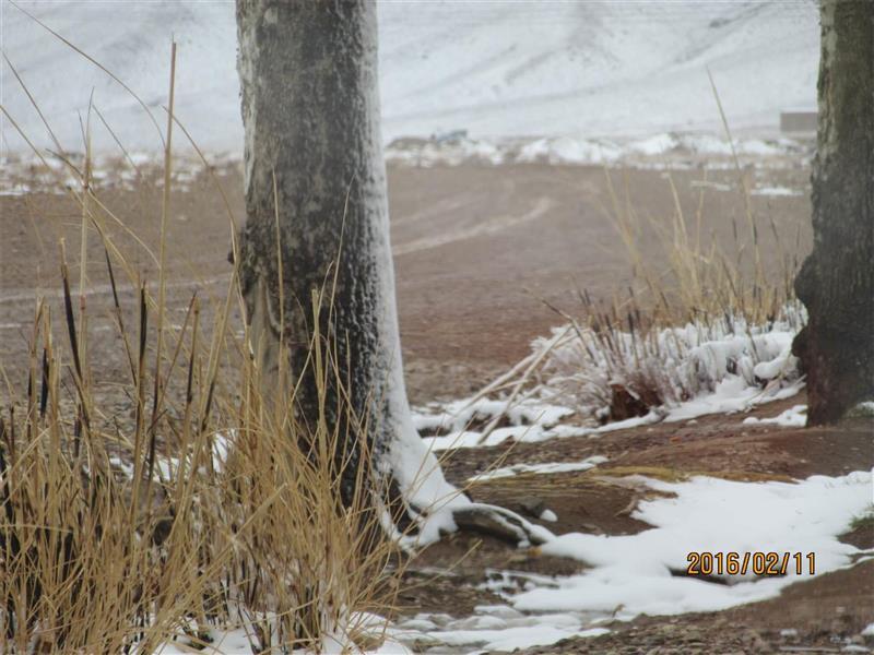 هنر عکاسی زمستان Mali_esh68