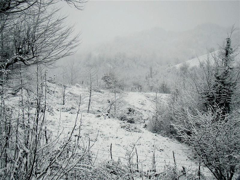 هنر عکاسی زمستان Aliastara