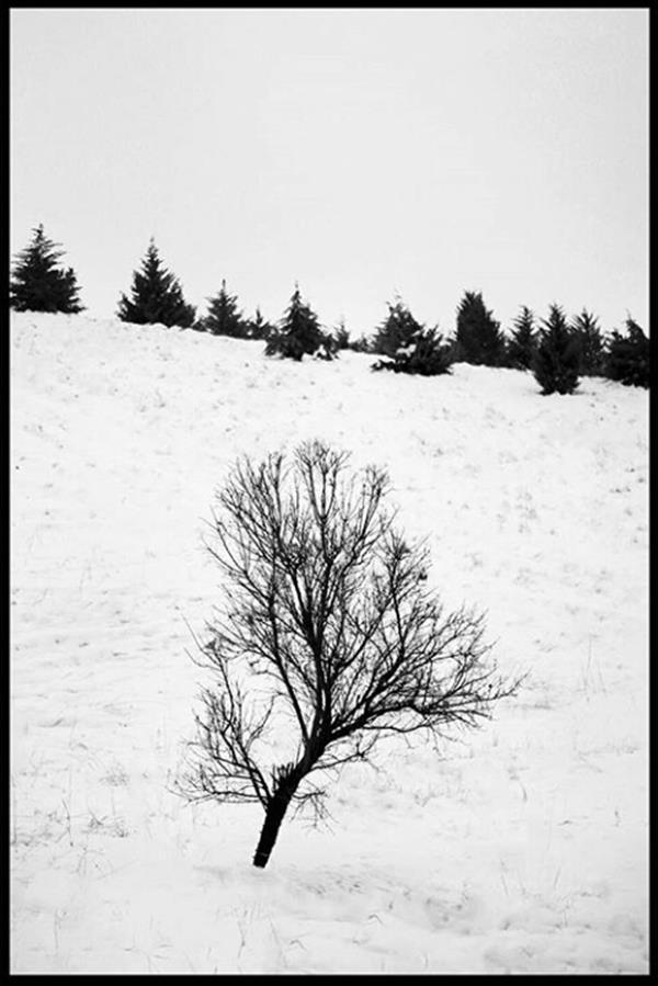 هنر عکاسی زمستان Sadrabagheri