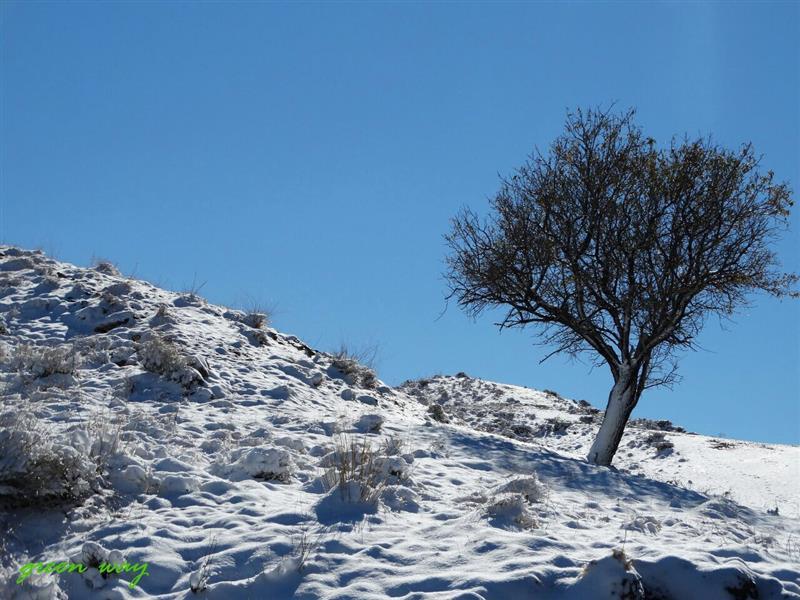 هنر عکاسی زمستان mehdi- green- way