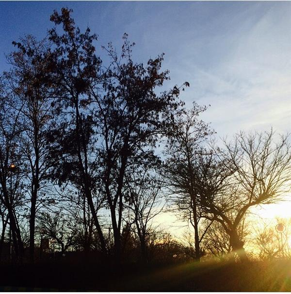 هنر عکاسی زمستان Tara beigi