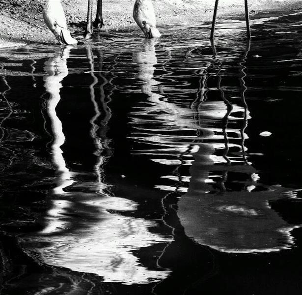 هنر عکاسی سایه ها zahraasli
