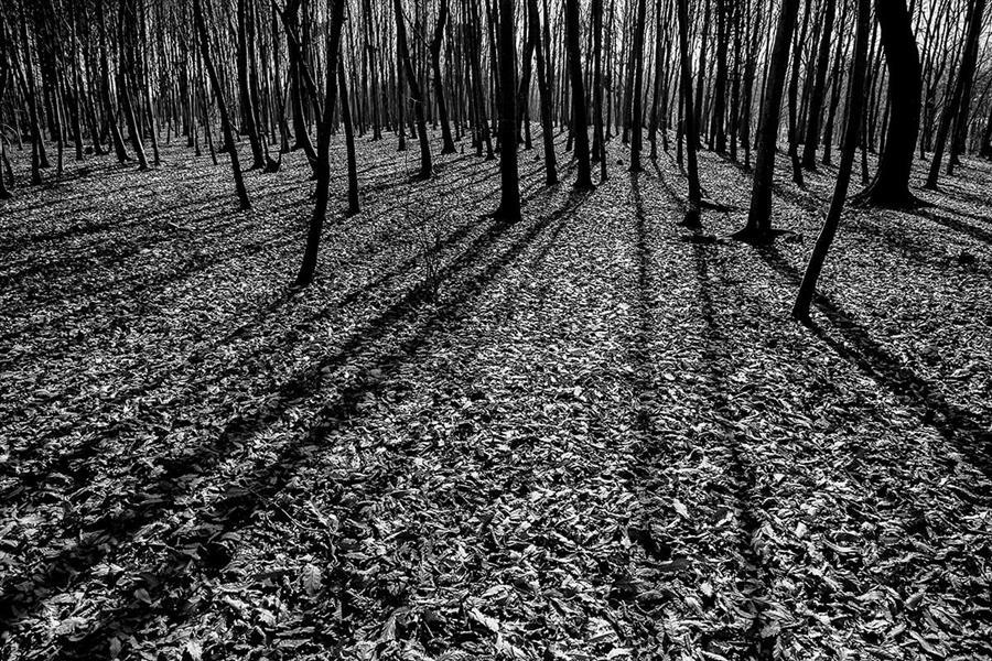 هنر عکاسی سایه ها امیر سوکی