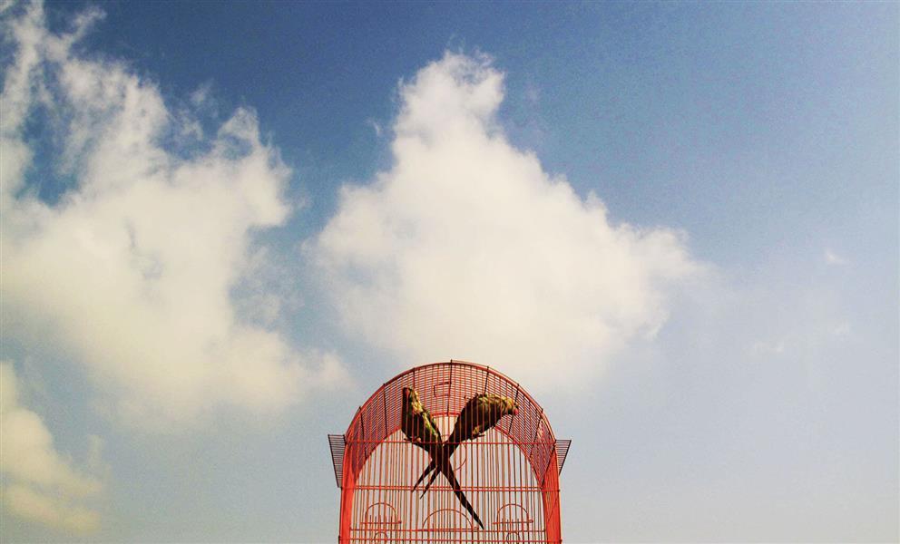 هنر عکاسی پرندگان zahraasli