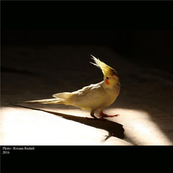 هنر عکاسی پرندگان Roxana