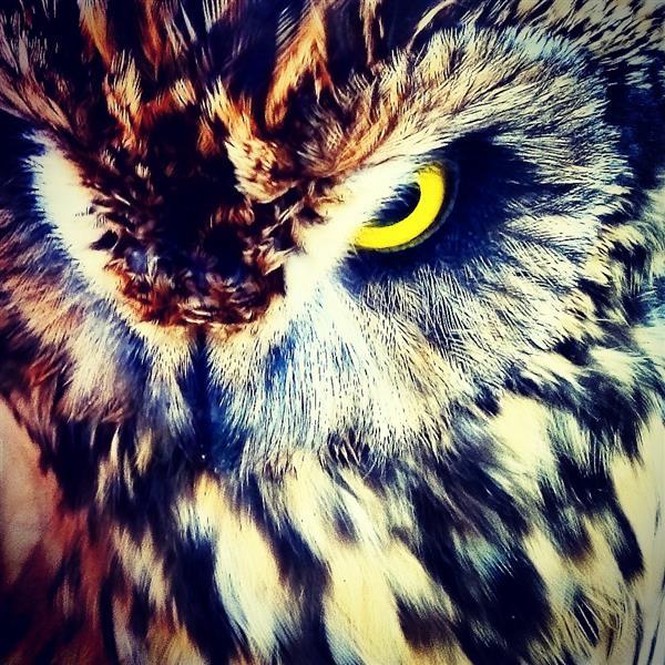 هنر عکاسی پرندگان Ben007s