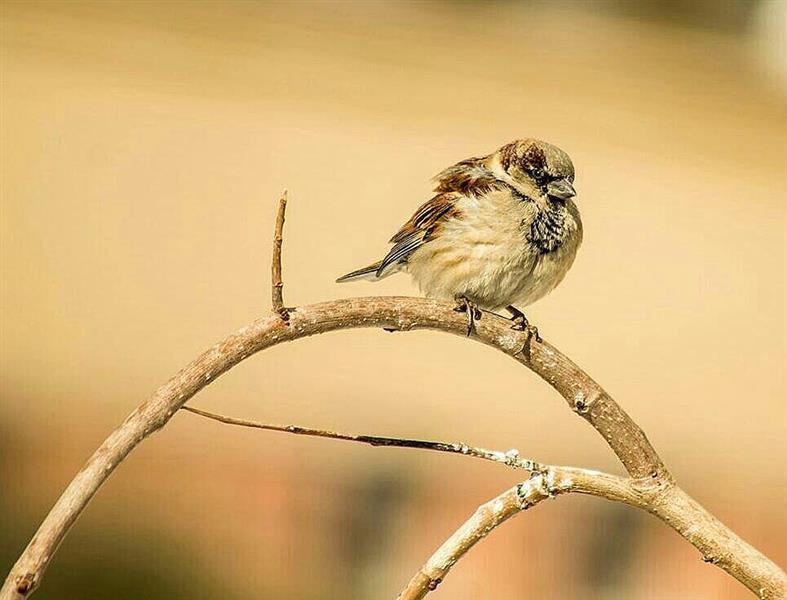 هنر عکاسی پرندگان Meysam