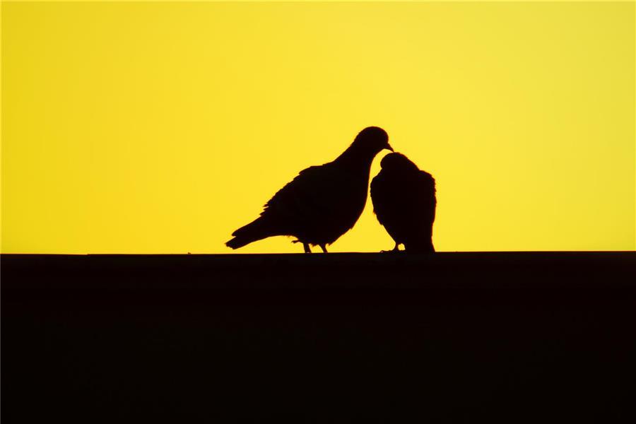 هنر عکاسی پرندگان Hossein MohammadPour
