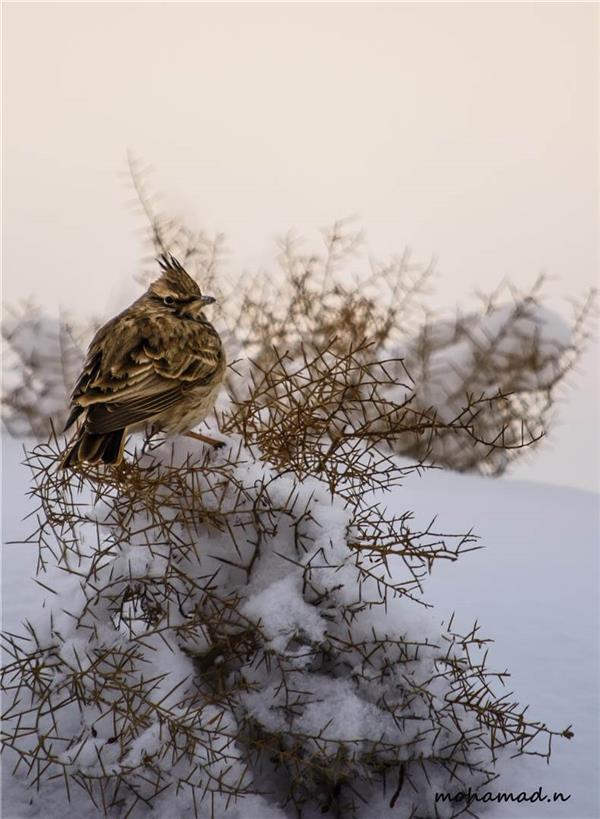 هنر عکاسی پرندگان محمد نورمحمدی