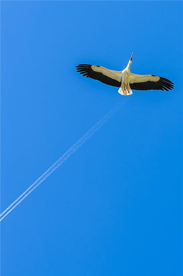هنر عکاسی پرندگان ahora33