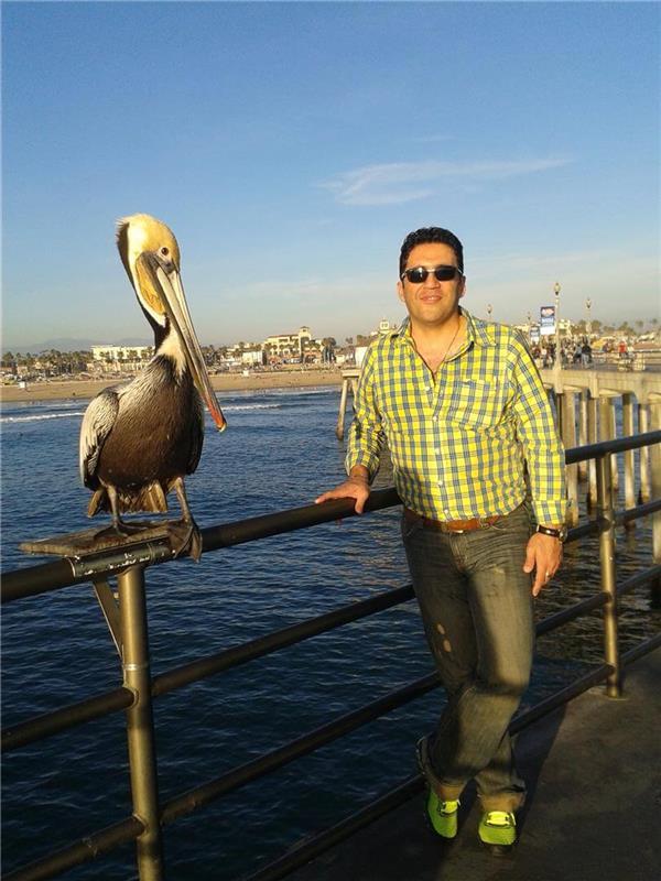 هنر عکاسی پرندگان Amir