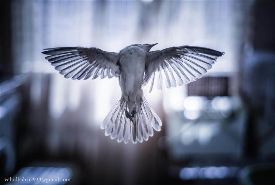 هنر عکاسی پرندگان وحید بهرى