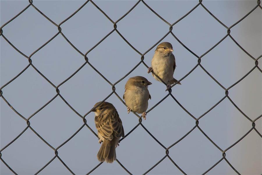 هنر عکاسی پرندگان mohamadbalali