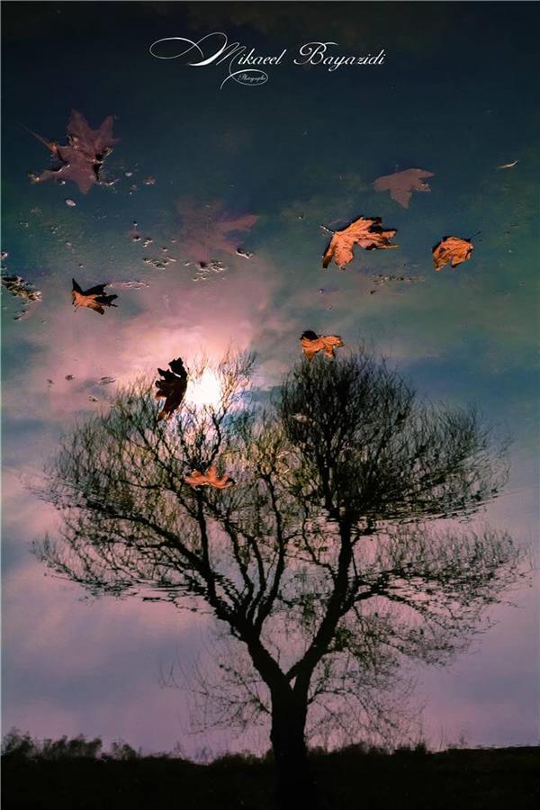 هنر عکاسی پاییز میکائیل بایزیدی