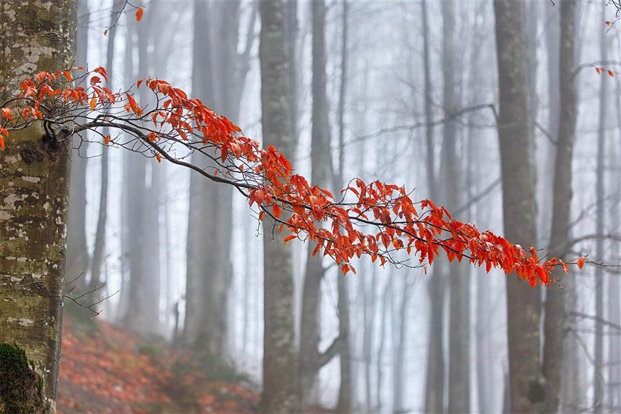 هنر عکاسی پاییز امیر سوکی