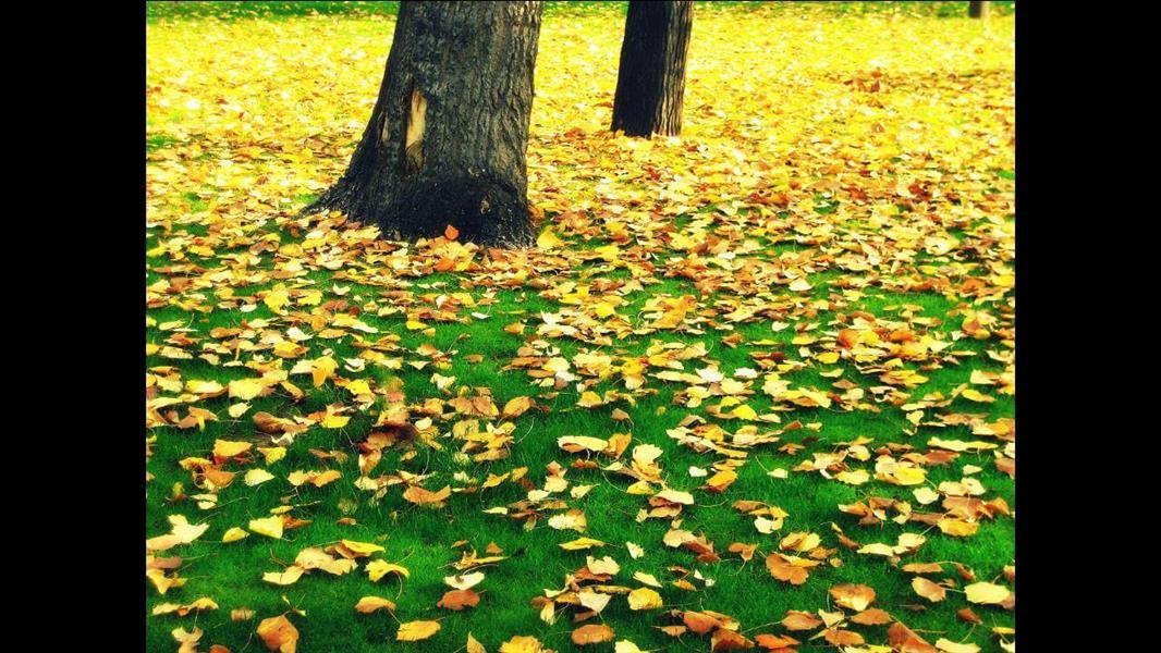 هنر عکاسی پاییز سجادکرباسی