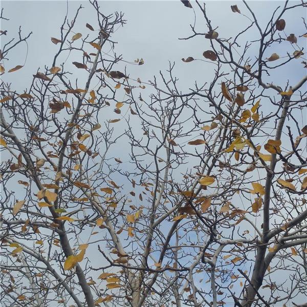 هنر عکاسی پاییز علی مشهدی