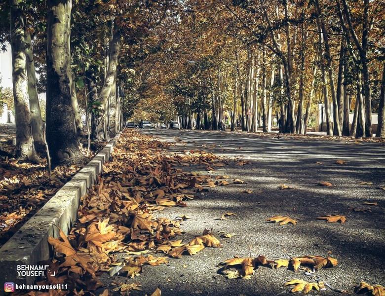 هنر عکاسی پاییز بهنام یوسفی