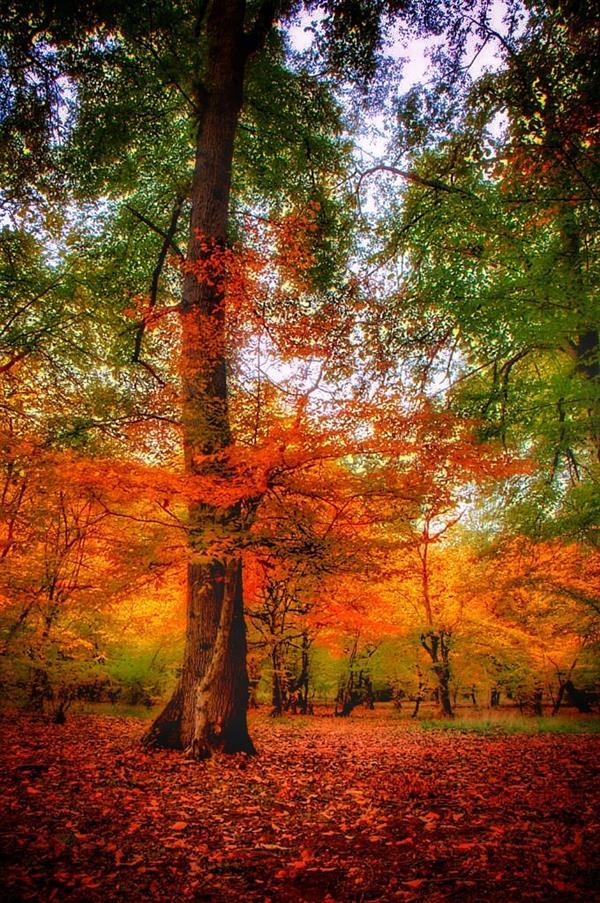 هنر عکاسی پاییز Masuodphotogeraphy