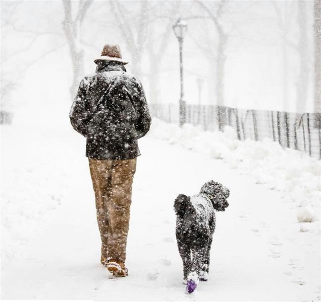 هنر عکاسی برف شیما مستوری