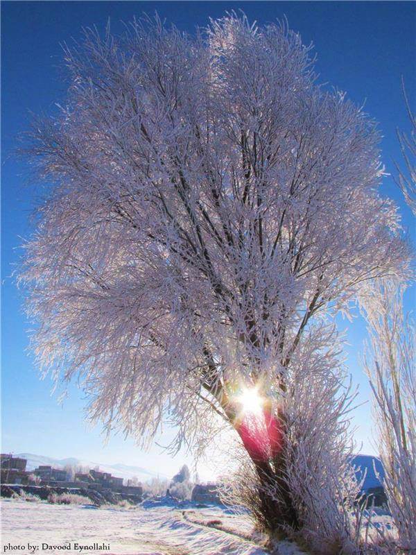 هنر عکاسی برف davood-eynollahi تکاب، آذربایجان غربی