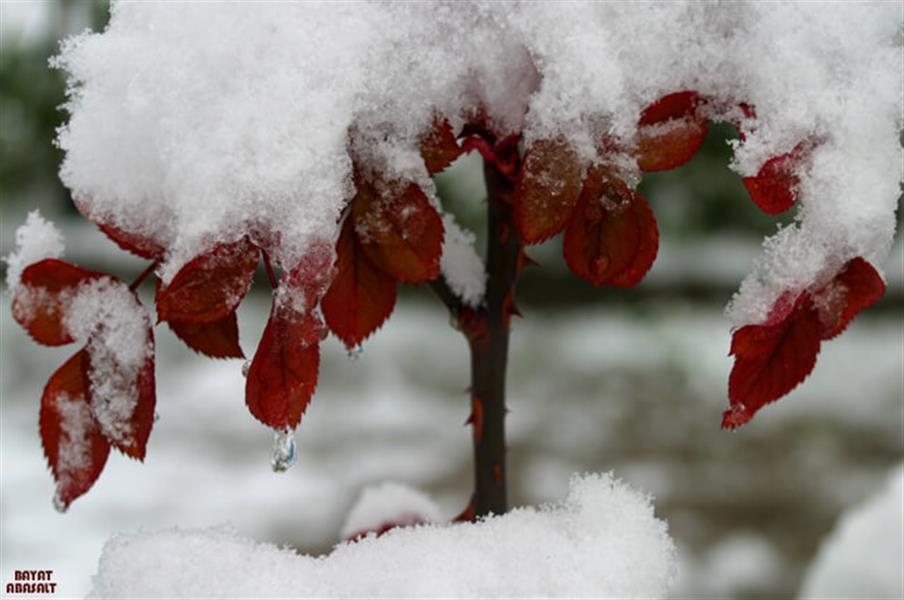 هنر عکاسی برف عکس اباصلت بیات