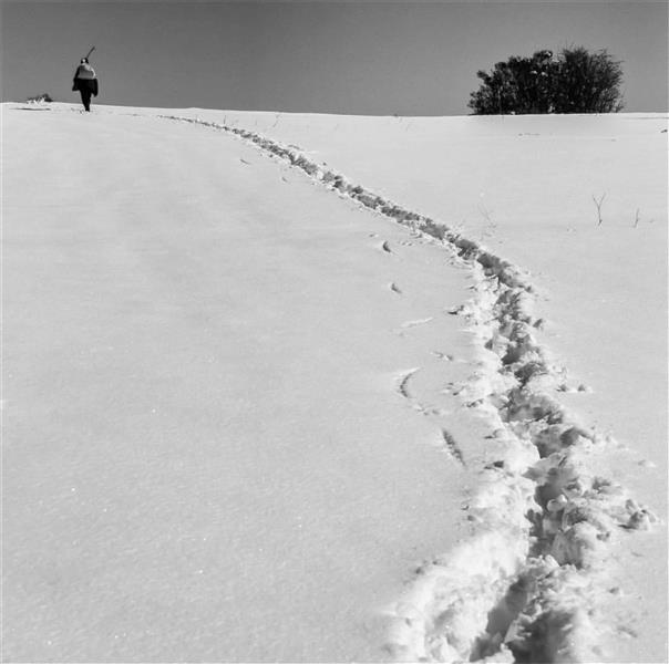 هنر عکاسی برف Simin safarzade