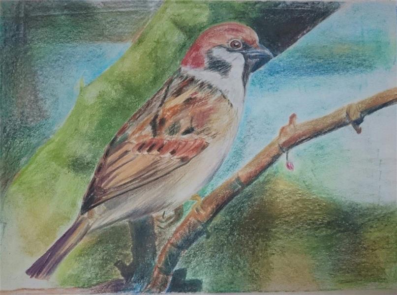 هنر نقاشی و گرافیک نقاشی حیوانات زینب آقایی  نقاشی با پاستل روغنی