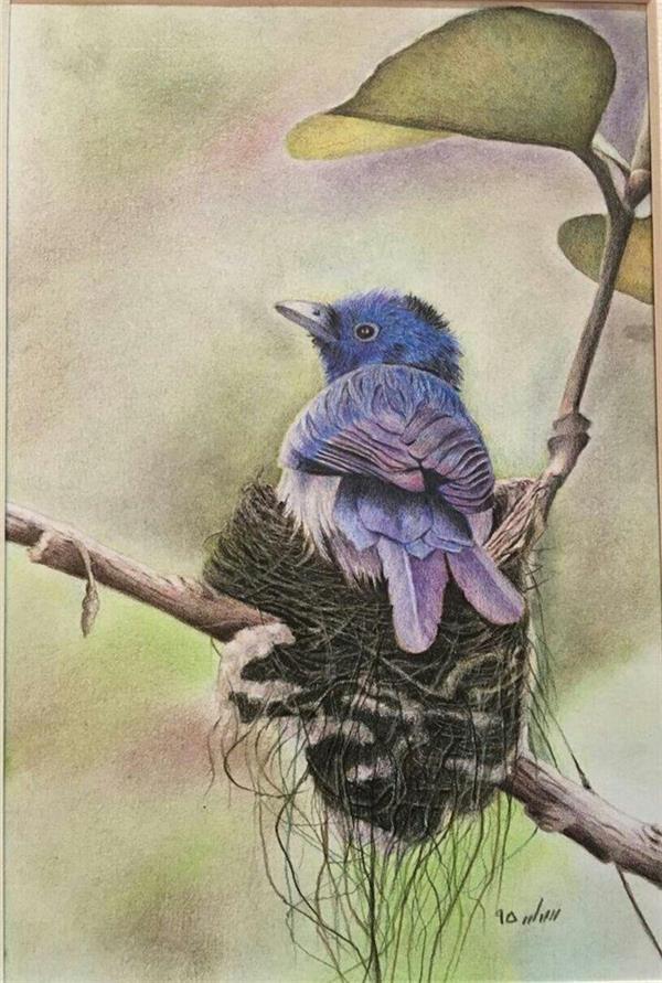 هنر نقاشی و گرافیک نقاشی حیوانات samaneh2 تکنیک: مدادرنگی اورجینال