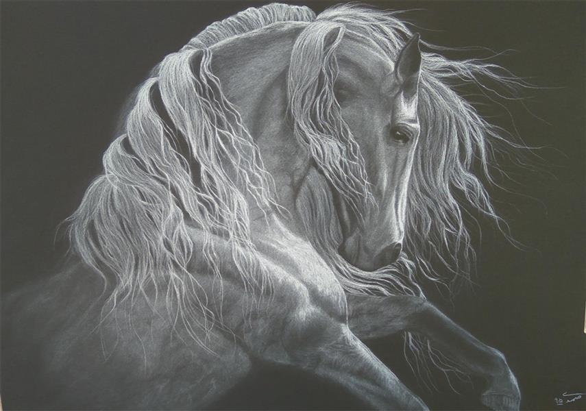 هنر نقاشی و گرافیک نقاشی حیوانات زهرا صمدی تکنیک کنته سفید  سبک رئال