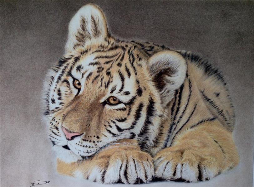 هنر نقاشی و گرافیک نقاشی حیوانات زهرا صمدی تکنیک مدادرنگ اورجینال  سبک رئال
