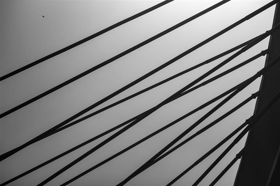 هنر عکاسی محفل عکاسی مجتبی گلستانی #مینیمال #سیاه_سفید #پرنده #پل #خط
