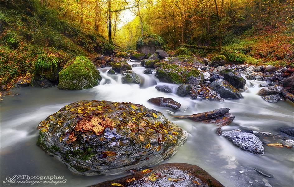 هنر عکاسی محفل عکاسی علی مهزیار مصیبی کلاردشت