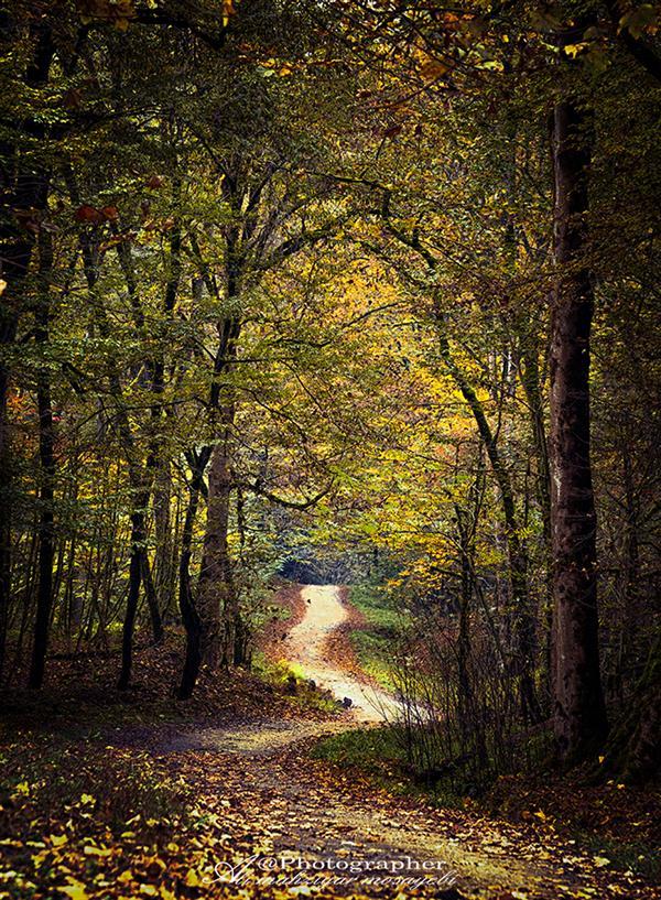 هنر عکاسی محفل عکاسی علی مهزیار مصیبی درخت  جنگل
