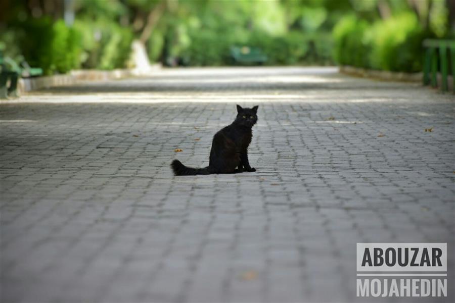 """هنر عکاسی محفل عکاسی ابوذر مجاهدین میو کردن گربه قلب را ماساژ می دهد. """"استوارت مک میلان"""" #گربه #شادی #زندگی"""