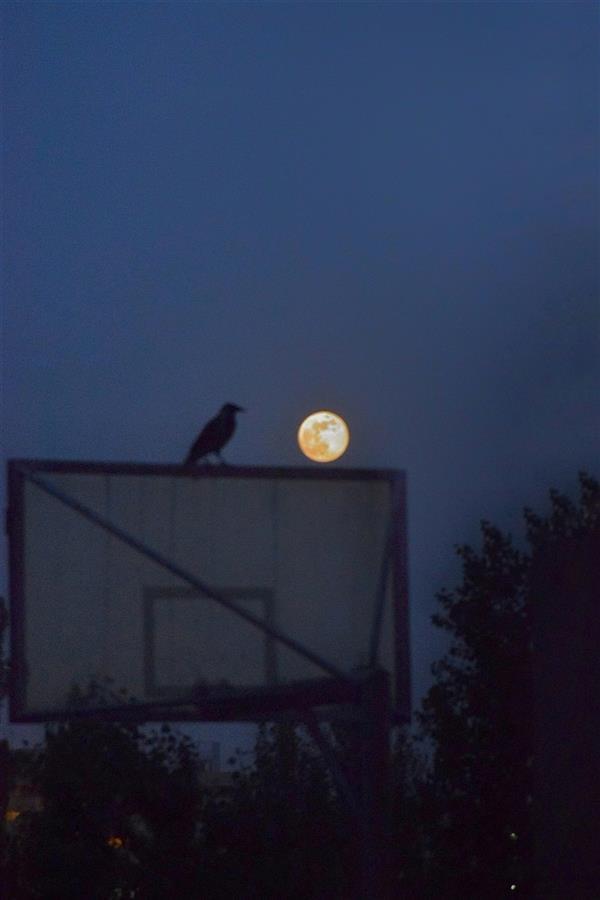 هنر عکاسی محفل عکاسی ابوذر مجاهدین #moon#birds#night #شب # ماه