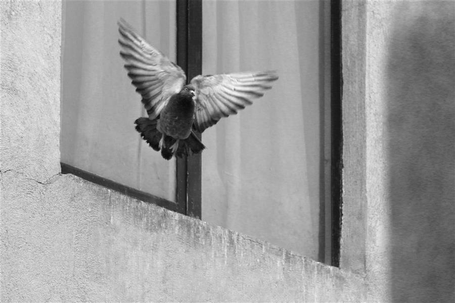 هنر عکاسی محفل عکاسی مژگان خلیلی پرواز
