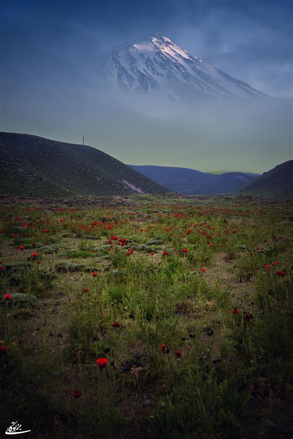 هنر عکاسی محفل عکاسی میثم توکلی #دماوند #قله #کوه_دماوند #دشت_شقایق