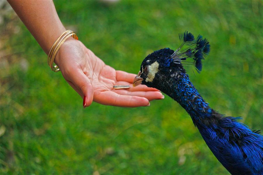 هنر عکاسی محفل عکاسی مژگان خلیلی #پرندگان#طبیعت