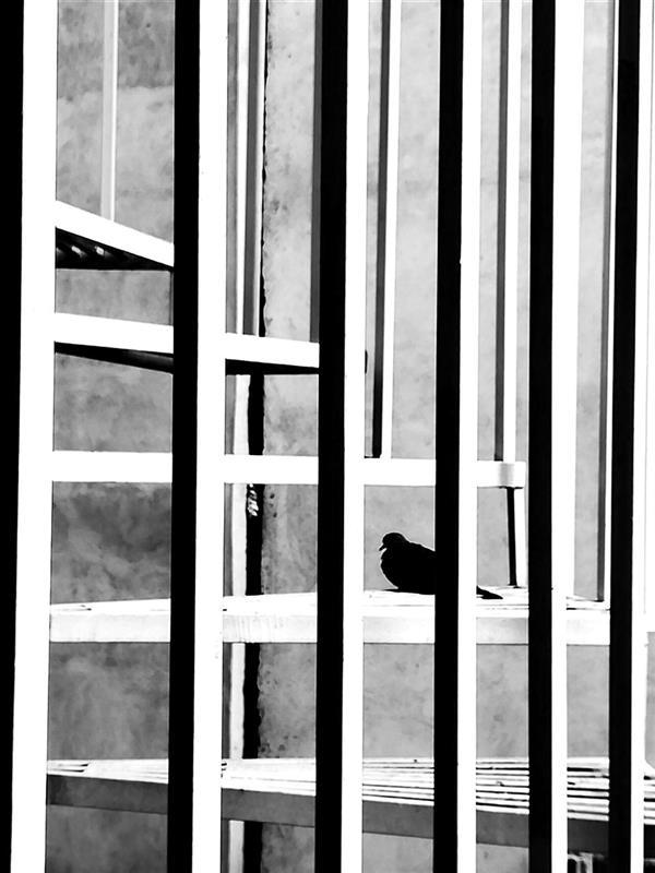 هنر عکاسی محفل عکاسی مهسا عبادیان منو تنهایی عکاسی مینیمال #مینیمالیست #مینیمال