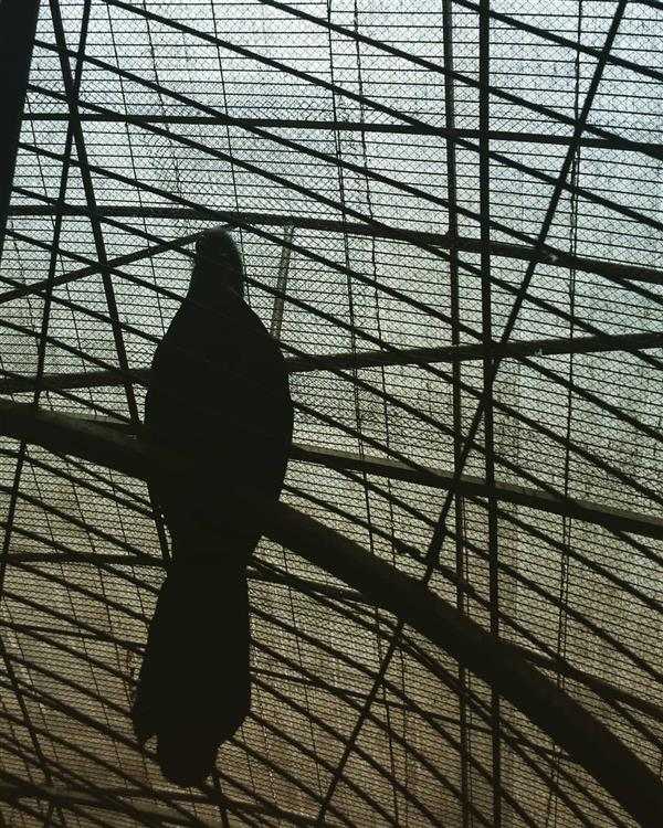 هنر عکاسی محفل عکاسی آرزو نوری  پرنده های قفسی عکس از  #آرزو_نوری خرداد 96