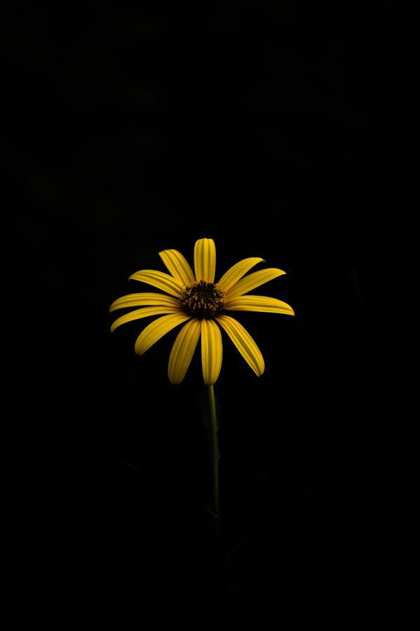 هنر عکاسی محفل عکاسی yones-mahmoudi گل زیبا