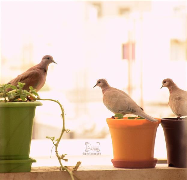 هنر عکاسی محفل عکاسی photodanube #پرنده