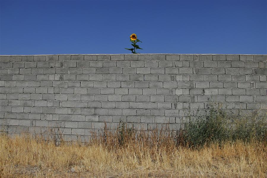 هنر عکاسی محفل عکاسی عباس رحمانی چاپ روی تخته شاسی #رشد #آب #زندگی #تلاش #عکس_روی_جلد #مجله #عکس_فروشی