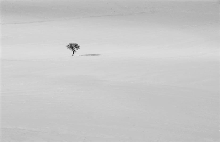 هنر عکاسی محفل عکاسی عباس رحمانی #زمستان#تک_درخت#مینیمال#مینیمالها