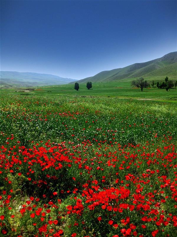 هنر عکاسی محفل عکاسی فرید اسلامی